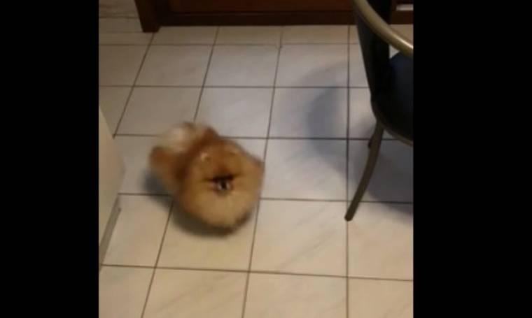 Απίθανο! Αυτός ο σκύλος νομίζει ότι κάθε ήχος που ακούει είναι για… φαγητό!