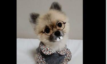 Πολύ γέλιο! Το χαριτωμένο σκυλάκι με τεράστια δόντια
