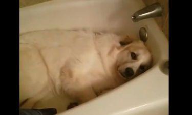 Τον τσάκωσαν να κοιμάται μέσα στη μπανιέρα κι αυτός... ανενόχλητος!