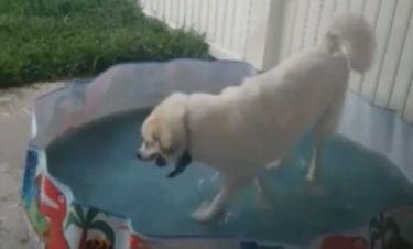 Τον «τσάκωσαν» να παίζει στην πισίνα των παιδιών - Δεν κρύβεται η χαρά του