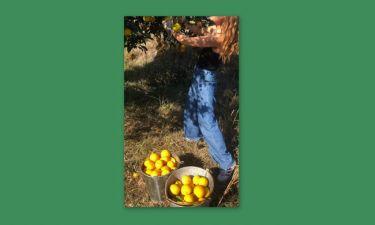 Πασίγνωστη Ελληνίδα ηθοποιός μαζεύει πορτοκάλια - Την αναγνωρίζετε;