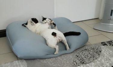 Τσακώνονται ή αγκαλιάζονται;
