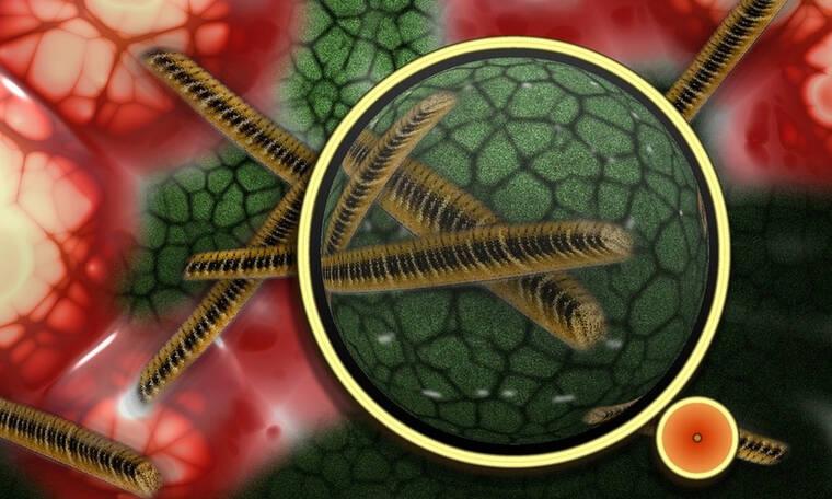 Παγκόσμια ανησυχία! Επικίνδυνο μικρόβιο στέλνει στο νοσοκομείο χιλιάδες ανθρώπους