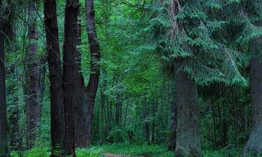 Μήπως είδες στο όνειρό σου δάσος;