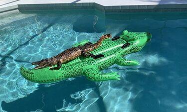 Επικό! Αλιγάτορας έκανε… όργια σε πισίνα πάνω σε πλαστικό αλιγάτορα (photos)